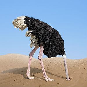 Ostrich-300