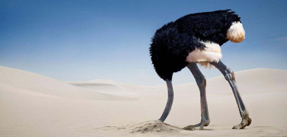Struisvogelgedrag
